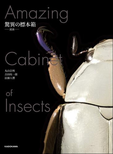表紙:驚異の標本箱 -昆虫-